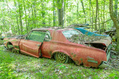 Old Red Cougar in Woods Stock Photos