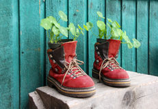 Old red hiking shoes with plants Royalty Free Stock Images