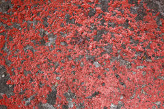 Old red painted concrete floor Stock Photography