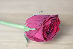 Old red rose on wood for love, remembrance. Old red rose on wooden background. Could be used for love, remembrance, peace stock photos