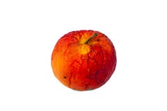 Old red rotten apple. Royalty Free Stock Photography