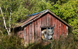 An old red shed in tall  grass Stock Image