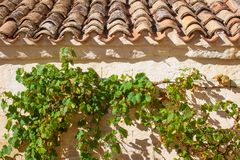 Old red tiles roof and grape plant stock image