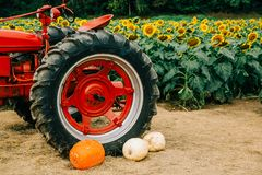 Free Old Red Vintage Tractor In A Sunflower Field Royalty Free Stock Image - 159791666