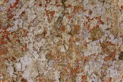 Old red wall with white peeling paint, scratches and mold with moss. rough surface texture. A old red wall with white peeling paint, scratches and mold with moss stock photography