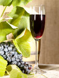 Old red wine in glass with vine and grape Royalty Free Stock Image