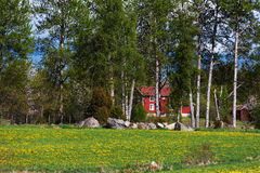 Old red wooden farmhouse behind birches Stock Photo