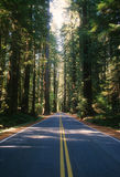 Old Redwood Highway Royalty Free Stock Photography