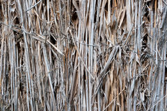 Old reed texture. Old reed dry fence as a texture Stock Photography