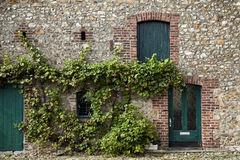 Old restored farmhouse wall with vine Royalty Free Stock Image