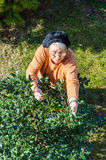 Old retired person gardening in backyard Royalty Free Stock Photography