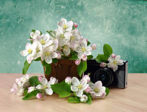 Old retro camera and blossoming apple tree. Nostalgia. Royalty Free Stock Images
