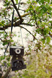 Old retro the camera hangs on an apple-tree in sunny spring day Royalty Free Stock Photography