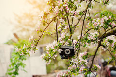 Old retro the camera hangs on an apple-tree in sunny spring day Stock Photos