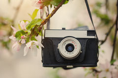 Old retro the camera hangs on an apple-tree in sunny spring day Stock Photo