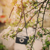 Old retro the camera hangs on an apple-tree in sunny spring day Stock Image