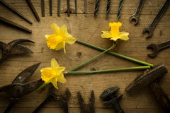 Old retro used tools with narcissus Stock Photo