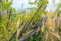 Old rickety fallen wooden backyard fence in the thickets of grass in the village stock image