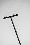 Old rickety wooden electric pole with wires Royalty Free Stock Photos