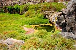 Old river oasis. Desert oasis  in Los Molinos valley Fuerteventura Royalty Free Stock Photos