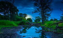 The old riverbed filled with trees Stock Photos