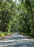 Old road. Country road in the woods on a background of trees Stock Images