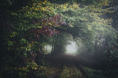 Old road in autumn forest with fog Royalty Free Stock Photo