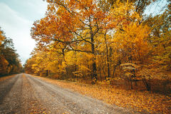 Old road in the autumnal forest Stock Photo
