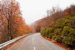 Old road in a forest Royalty Free Stock Photo