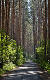 The old road through the forest. Royalty Free Stock Images