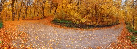 Old road in forest - panoramic Royalty Free Stock Photography