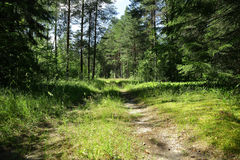 Old road in the middle of a forest in Sunny day.  Royalty Free Stock Images
