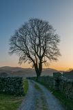 Old road and tree silhouette stock images