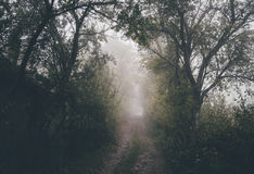 Old road trough forest Royalty Free Stock Images