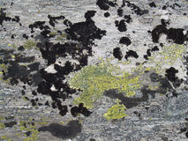 Old rock. With yellow and black lichen Royalty Free Stock Image