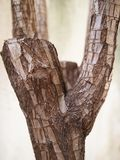 The old rock liked plant bark without leaf. Texture of old tree bark Royalty Free Stock Photos