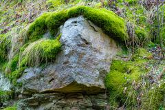 The old rock in the wood moss-grown.  Stock Image