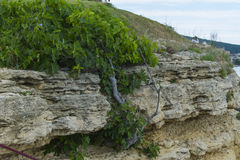 Old rocks shaped by sea. Rocks cliff shaped by the waves of the sea with some green plants Royalty Free Stock Photo