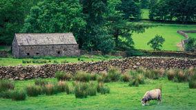 Old rocky home and sheep on green pasture in District Lake Royalty Free Stock Photo