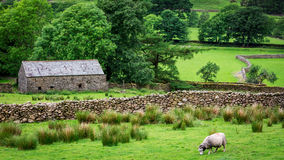 Old rocky home and sheep on green pasture, UK Royalty Free Stock Photography