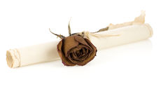 Old rolled  paper with rose flower isolated on white Royalty Free Stock Photography