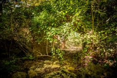 Old roman bridge in the woods royalty free stock image