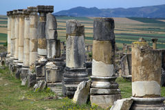 Old Roman Columns, Volubilis, Morocco Royalty Free Stock Photos