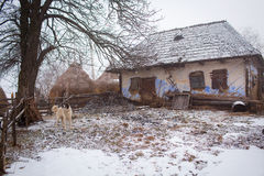 Old romanian village house in winter with bound dog Stock Photos