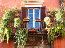 Old Rome. Balcony with different vases and plants in an old Rome district, Italy Royalty Free Stock Image