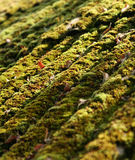 Old roof. With moss on it Royalty Free Stock Photos