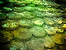 Old roof of ancient potsherd lens. The roof of ancient potsherd under moss royalty free stock image