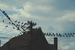 Old roof and birds, vintage concept, travel Europe Romania.  Stock Photography