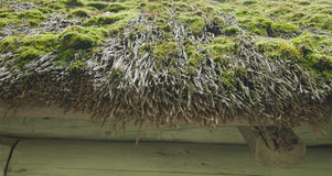 Old roof of reeds, covered with moss, close-up Stock Image