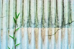 Old roof texture with grass royalty free stock photos